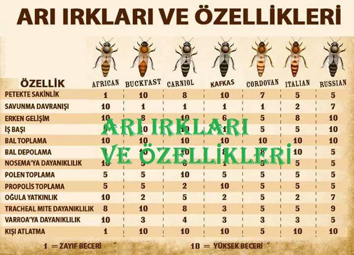 arı-ırkları